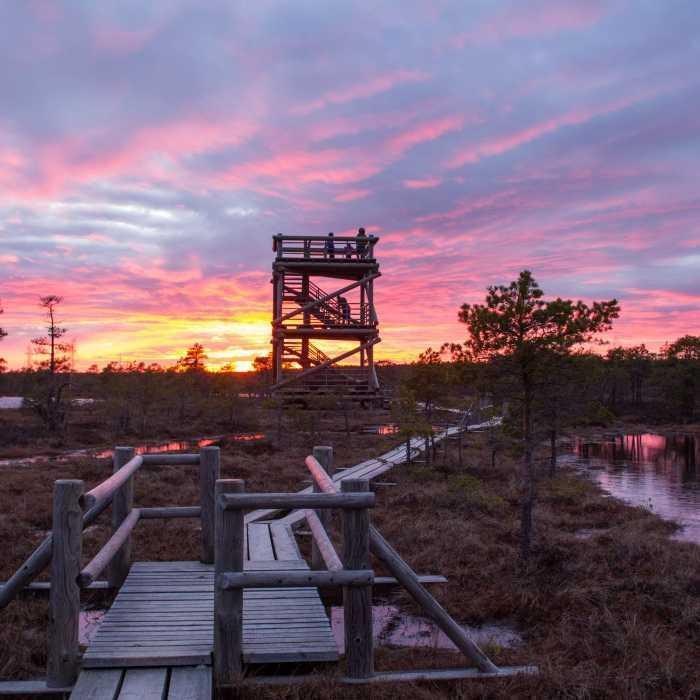 Мостки через Большое Кемерское болото