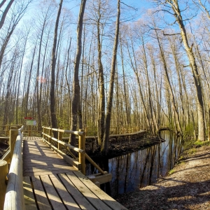 Black Alder Swamp Boardwalk
